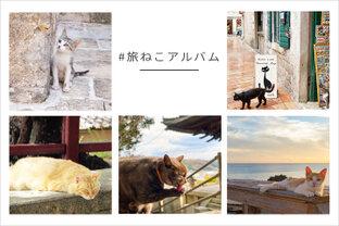 #旅ねこアルバム|写真投稿コンテスト