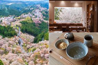 朝霧や夜桜も楽しめる♪桜の名所・吉野山へ春さんぽ