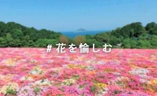#花を愉しむ|写真投稿コンテスト