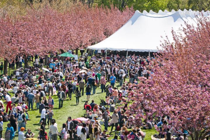 ブルックリン発♪ニューヨークの桜祭りへ行きませんか?