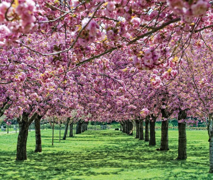 桜の遊歩道を歩いてみましょう
