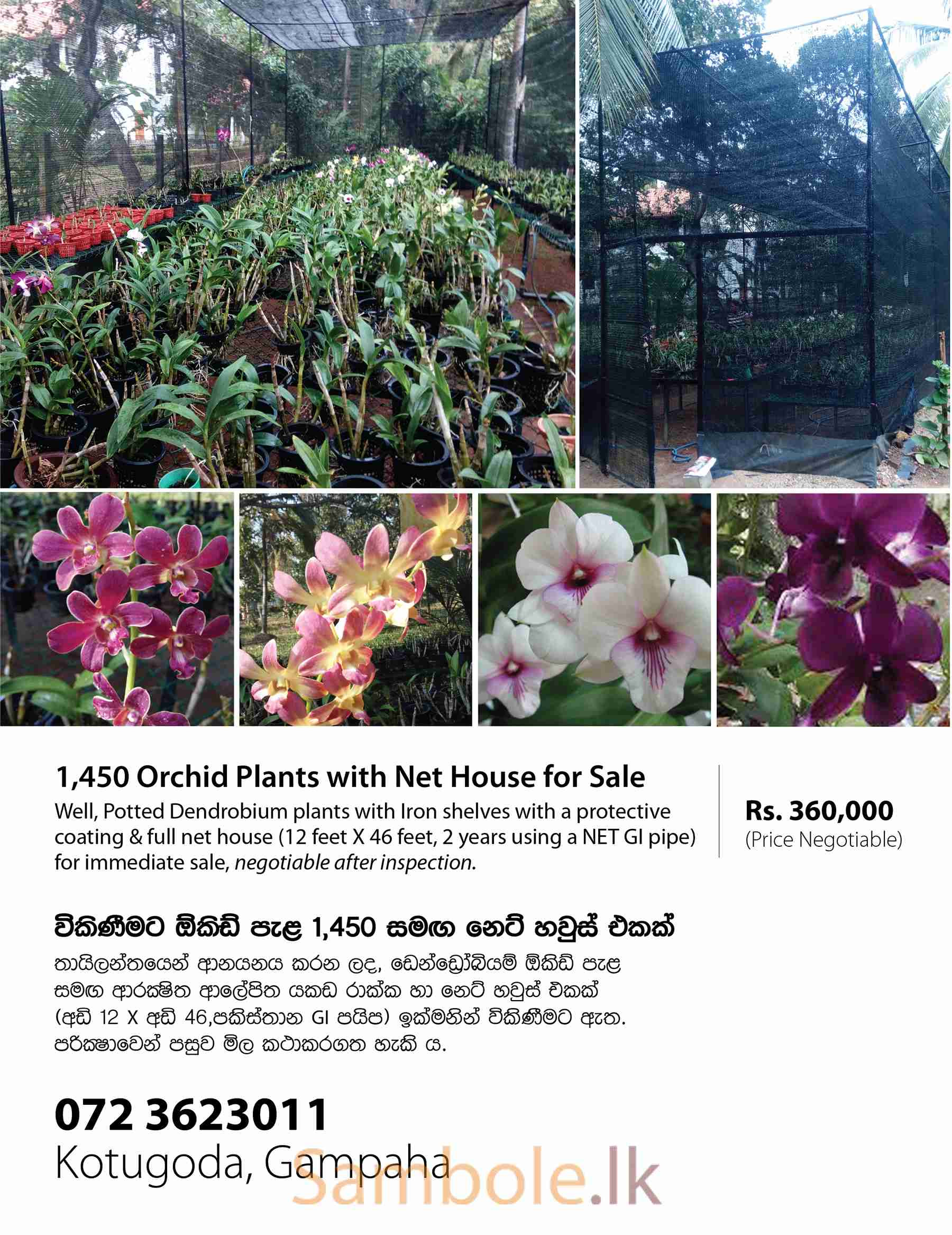 Orchid Plants With Net House For Sale Sambole Lk