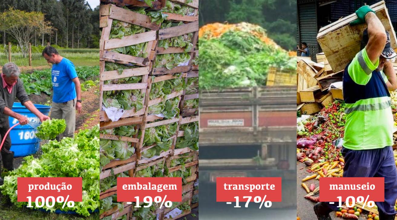 Infográfico demonstrando o desperdício da produção de hortaliças folhosas. As perdas demonstradas são: 19% de desperdício no processo de embalagem, 17% no transporte e 10% no manuseio.