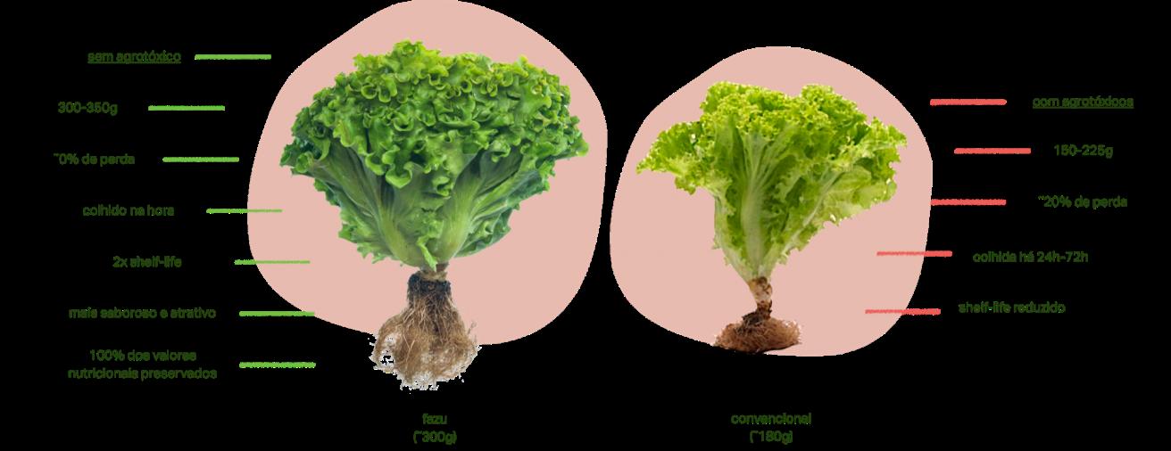 Gráfico comparativo entre uma alface fazu e uma alface convencional. Alface fazu: sem agrotóxicos, tendo entre 300 e 350 gramas, com 0% de perda, colhido na hora, com o dobro de shelf-life, mais saborosa e atrativa e com 100% dos nutrientes preservados. Alface convencional: com agrotóxicos, tendo entre 150 e 225 gramas, com cerca de 20% de perda, colhida entre 24 e 72 horas atrás e com shelf-life reduzido.