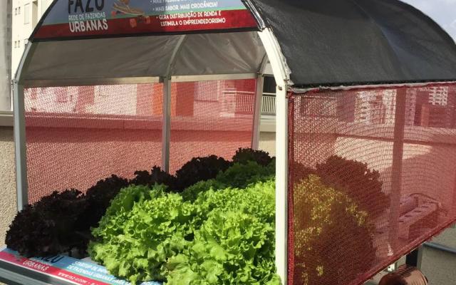 PEGN - Startup monta horta urbana e sem agrotóxico na cidade de São Paulo