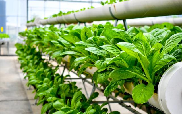 Vegmag - Startup cultiva hortaliças em áreas cinzas da cidade