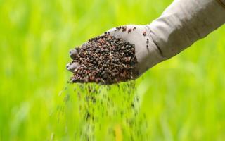 Globo Rural - Startup lança plataforma para venda de fertilizantes em tempo real