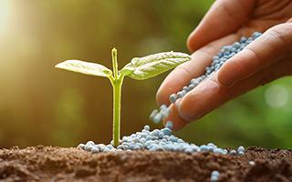 Canal Rural - Startup ajuda produtores para melhores compras de fertilizantes