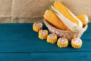 O milho foi mais uma contribuição da América para o mundo
