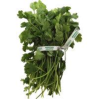 Fresh Cilantro Herbs, 1 Each