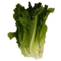 Fresh Green Leaf Lettuce, 1 Each