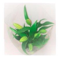 Mixed lillies