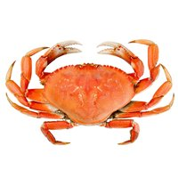 Dungeness Crab, Cooked, 1 Pound