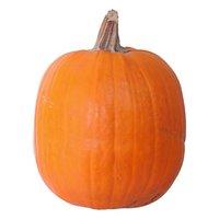 Pumpkin, Lil Tiger, 20 Pound