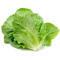 Baby Romaine Lettuce, 1 Pound