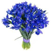 Blue Iris, 10-stem, 1 Each