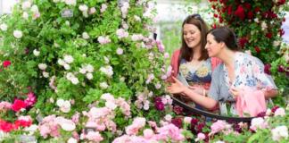 où sortir RHS Chelsea Flower Show