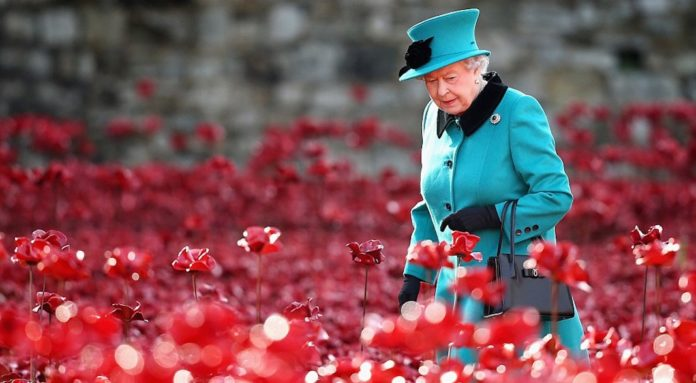Poppies novembre question bête