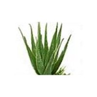 Aloe Vera Leaves, 1 Each