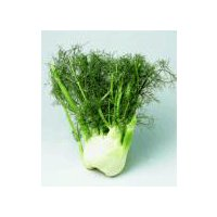 Anise Florence/Sweet Fennel/Fennel, 1 Each