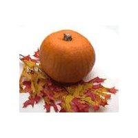 Fresh Mini Pumpkin, 1 Each
