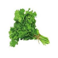 Delicious herb used to flavor meals with an aromatic fragrance