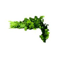 Italian Parsley, 1 bunch, 1 Each