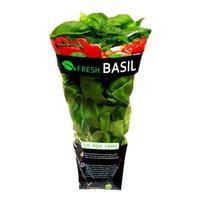 Fresh Fresh Basil in Bag, 3 Ounce