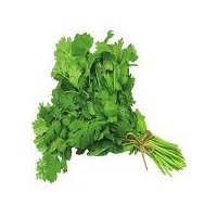 Delicious herb used to flavor meals with an aromatic fragrance.