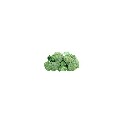 Delicious flowering heads of broccoli that make a healthy addition to any meal