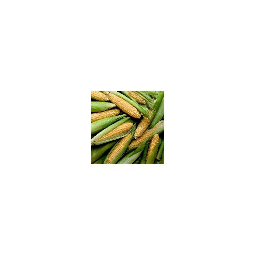 Most popular type of corn. A mix of both white and yellow kernels on one cob that has a really sweet taste.