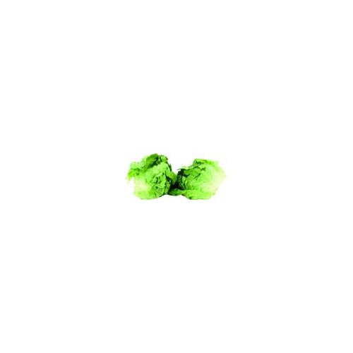 Butter lettuce with a sweet crunchy taste.
