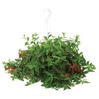 Tropical Plants - Hanging Baskets