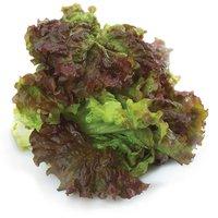 Lettuce - Red Leaf, Fresh