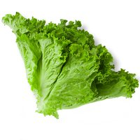 Crisp and full-flavoured. Use green leaf lettuce in your next salad or as a topping for burgers and sandwiches.
