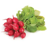 Radish, that common and beloved part of your salad, is a root crop, and it is pungent or sweet in taste with a lot of juice.
