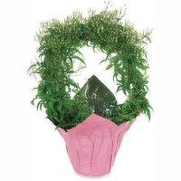 Jasmine - Hoop Potted Planter 6in, 1 Each