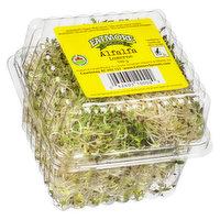Eatmore Organic - Alfalfa Sprouts