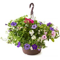Hanging Basket - Mixed Flowers, Fresh 12In, 1 Each