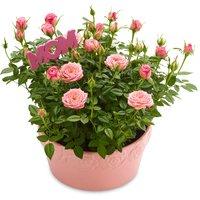 Mini Roses - in a Ceramic Rose Embossed Pot 4IN, 1 Each