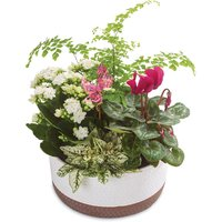 Makes a beautiful gift for any season. Pink Cyclamen & white Kalanchoe flowers.