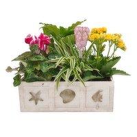 Save-On-Foods - Floral - Seaside Planter