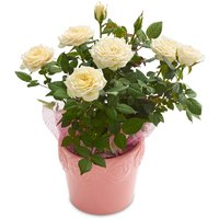 Mini Roses - Embossed Ceramic Drop In Planter 8 in, 1 Each
