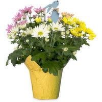 Chrysanthemum Chrysanthemum - Easter Egg Pot Mum W Bunny Pick, 1 Each