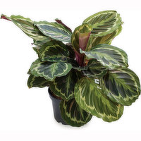 Save-On-Foods Save-On-Foods - Tropical Planter, 1 Each