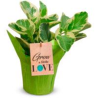 Tropical Tropical - Planter Pot, 1 Each