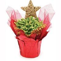 Fern - Christmas Planter 4in, 1 Each