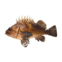 Ocean Wise - O/W Live Quillback Copper, 1 Pound