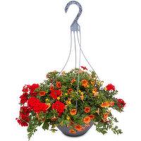 N/A - Premium Hanging Basket, 1 Each