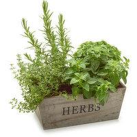 N/A - Vintage Herb Planter, 1 Each